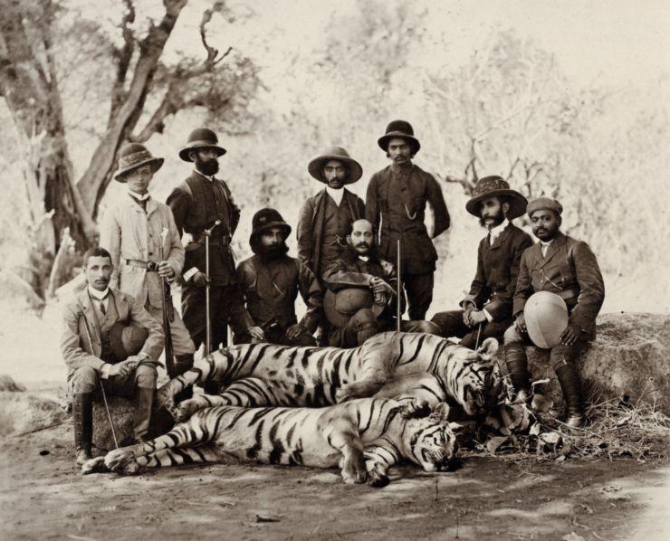 tigri9